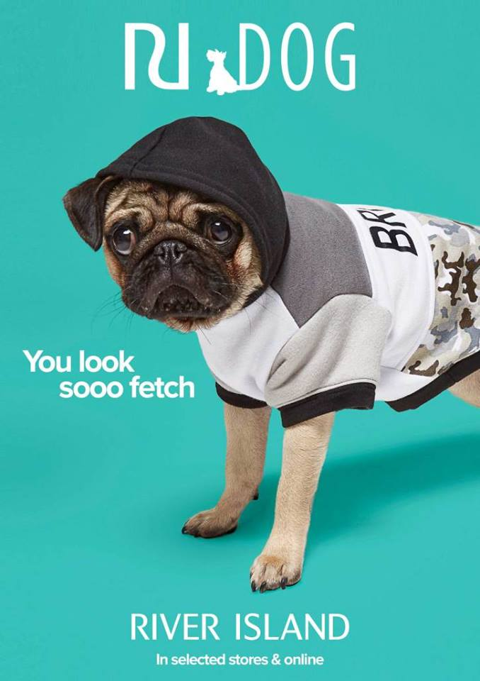 Pooch fashion in River Island, New Square Shopping Centre